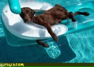 bb dog days